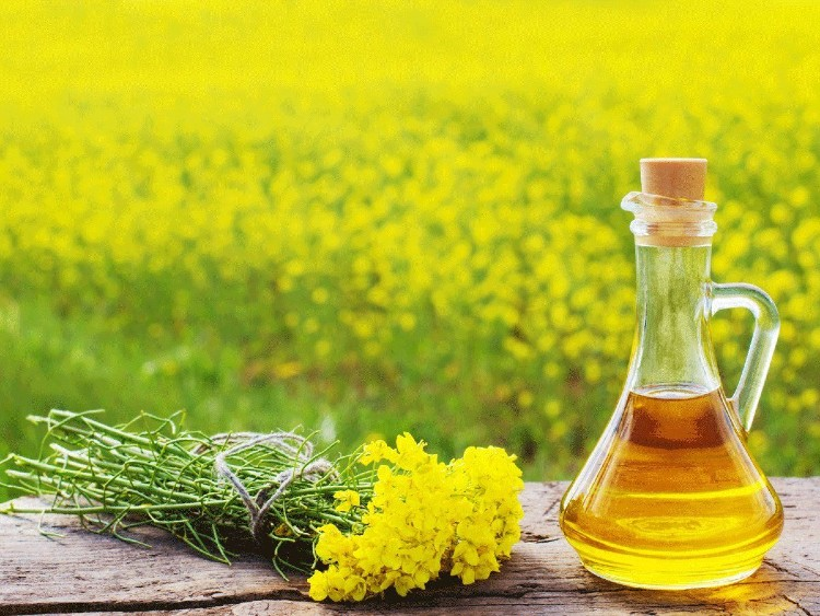 is mustard oil good for health