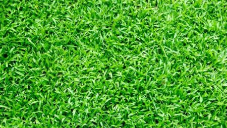 Buy Turf Sydney From Professional Landscapers Ensures Attractive Lawns